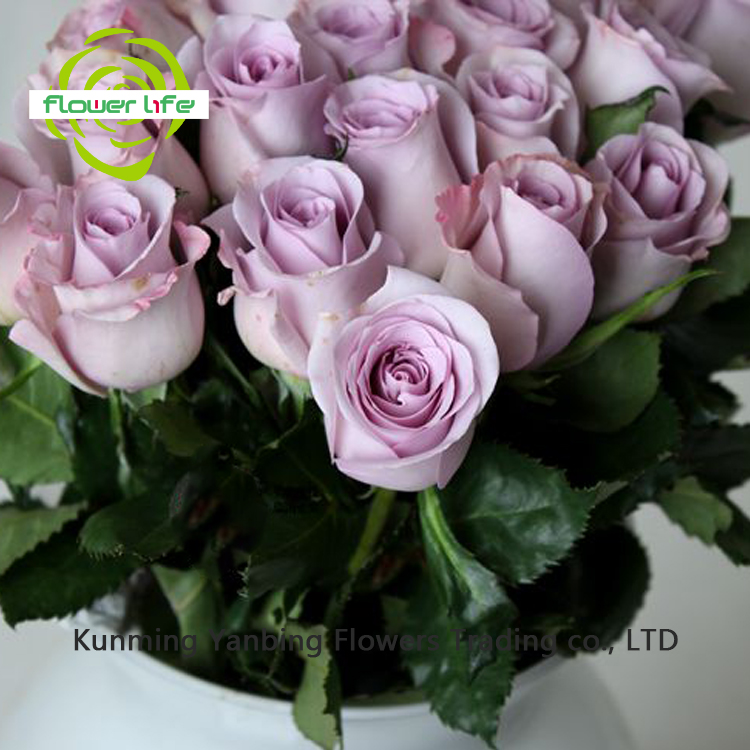 For Mother Day China New Wholesale Flowers Ocean Song And China Flowers Ocean Song With Stem