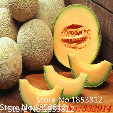 jenis buah melon