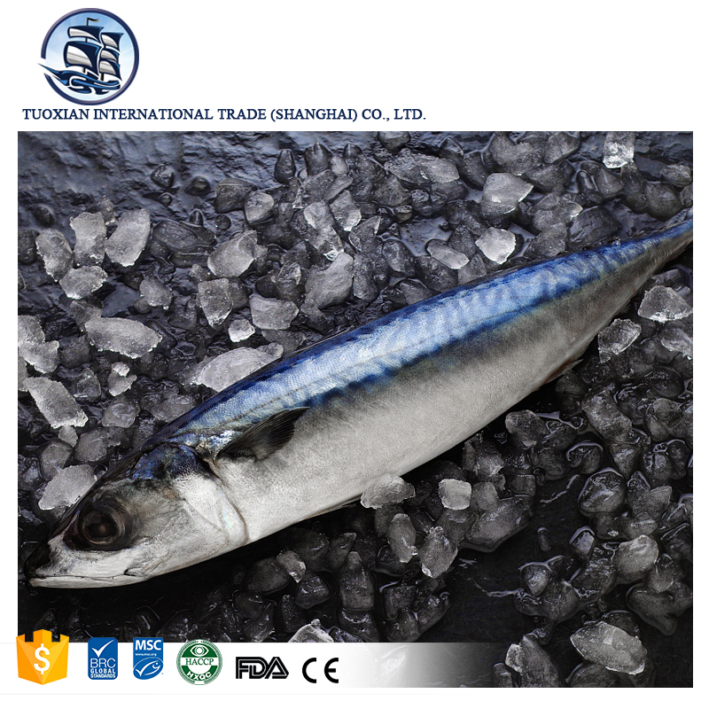 Wholesale best frozen pacific fish mackerel frozen fish price