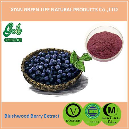 Blushwood Berry Extract Powder, Blushwood Berry Extract Powder ...