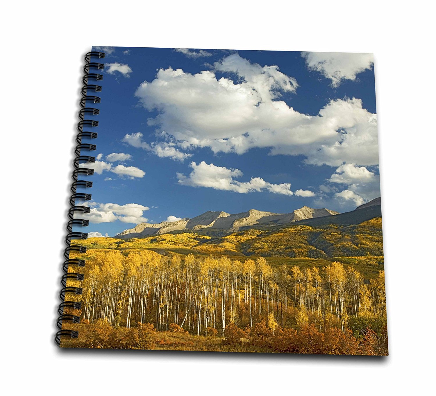 Danita Delimont - Charles Gurche - Forests - USA, Colorado, Gunnison National Forest. - Memory Book 12 x 12 inch (db_189746_2)
