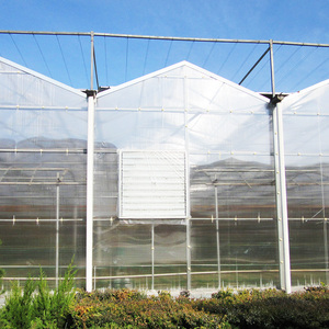Tropical Greenhouses And Commercial Hydroponic Growing Systems For Tomato, Lettuce and Strawberry