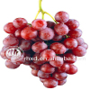 Seedless Grape Variety and Common Cultivation Type Red Globe Grapes