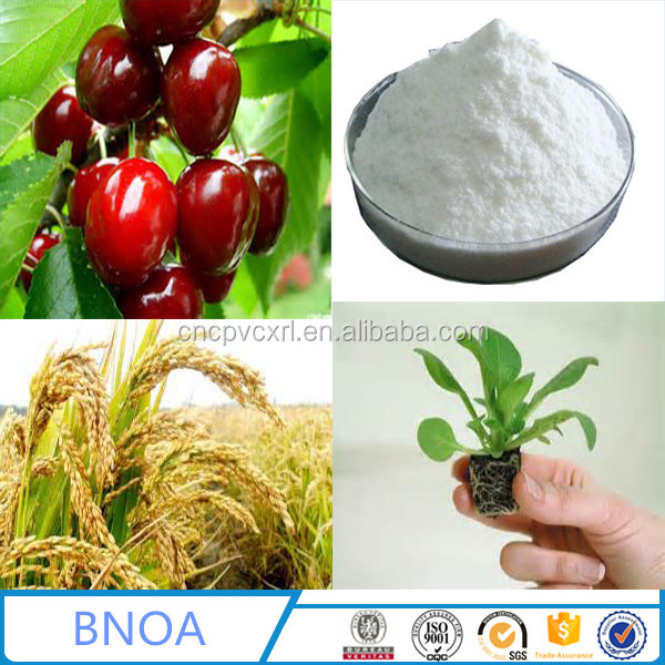 Supply Plant Stimulant 2-Naphthoxyacetic Acid powder BNOA with 98% TECH