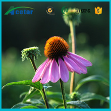 Kosher,ISO Certified Traditional Chinese Herb Extract echinacea power health, does echinacea extract expire