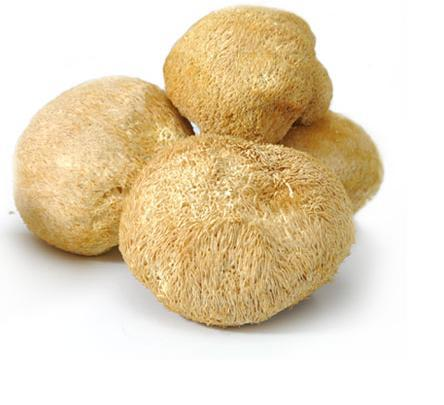 Organic anti cancer Hericium Erinaceus Lions mane mushroom alcohol extract 3% Hericenone