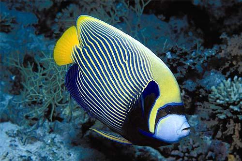 Aquarium Fish,Aquarium Plants,Freshwater Fish,Saltwater Fish ...