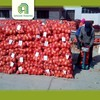 wholesale onion sell pickled onions with great price