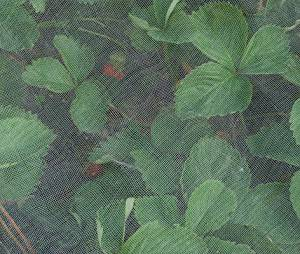 Extra Fine Insect Netting: Keeps out Aphids, Black & Whitefly 5m x 2m