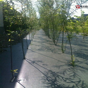 Factory Supply China High Quality Black PP Woven Weed Barrier/Weed Control Fabric