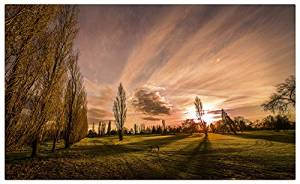 Poplars-in-the-sunset Postcard Post card
