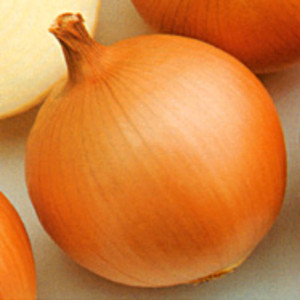 Fresh yellow onion importer from dubai