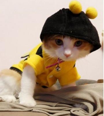 חתול בגדים