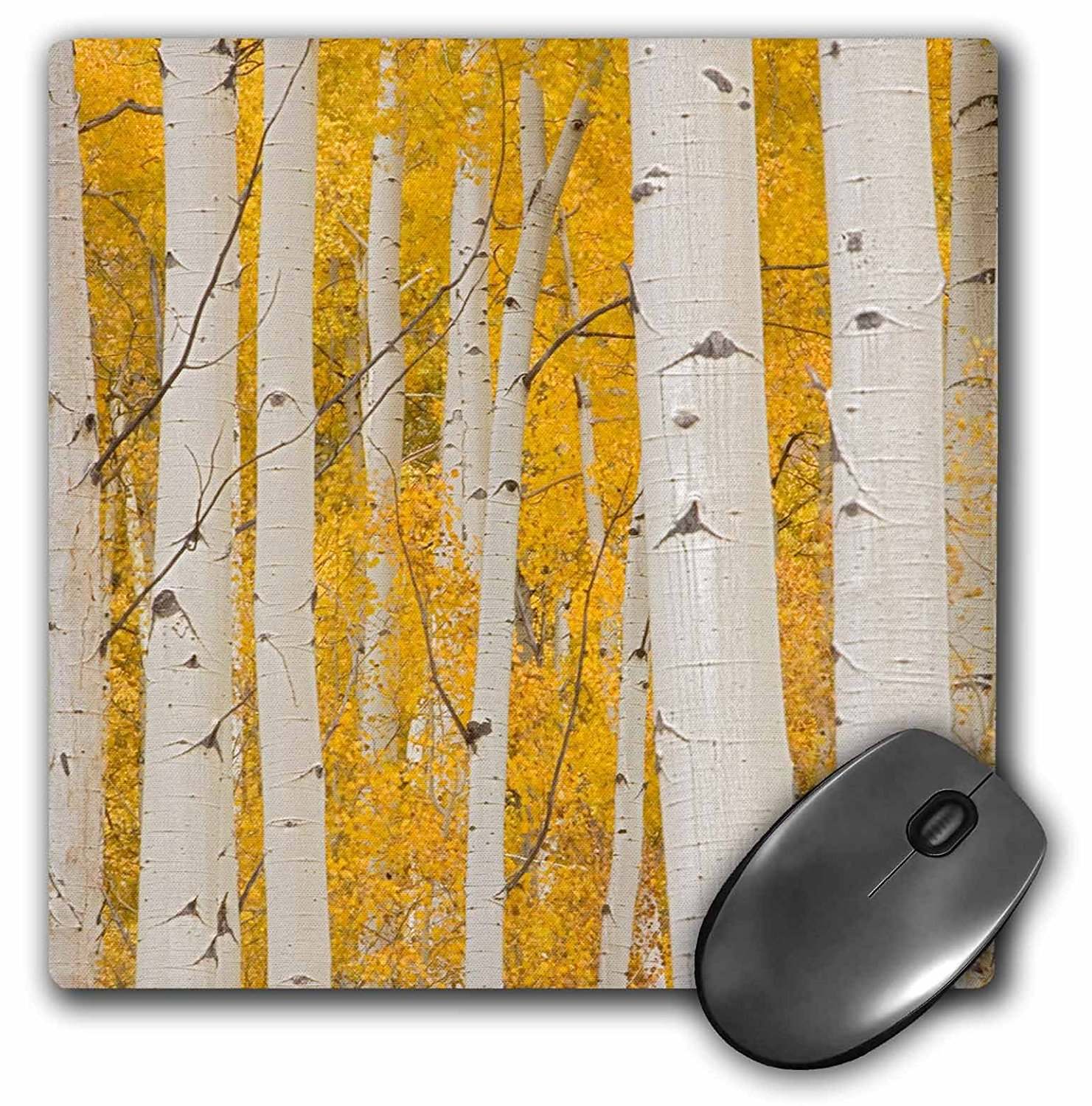Danita Delimont - Charles Gurche - Trees - USA, Colorado, White River National Forest, Aspen. - Mouse Pads (mp_189910_1)