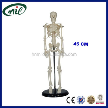 45cm Miniature Human Skeleton Model With A Movable Jaw On Springs - Buy  Miniature Skeleton Model,Human Skeleton,45cm Skeleton Product on Alibaba com