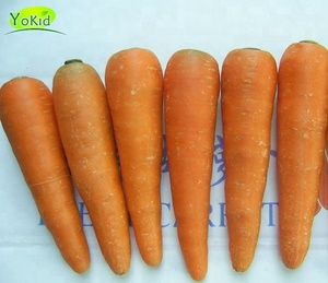 Fresh China Carrot , Red Carrot