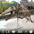 MY DINO-DSS011 Animal Skeleton Model for Sale