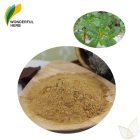 Bacopaside brahmi Monniera pure Bacopa monnieri Extract Powder Bacosides