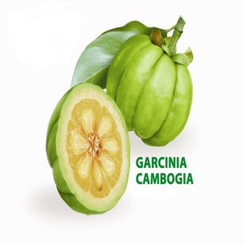Natural Herbal Plant Garcinia Cambogia Fruit Extract Hca Powder