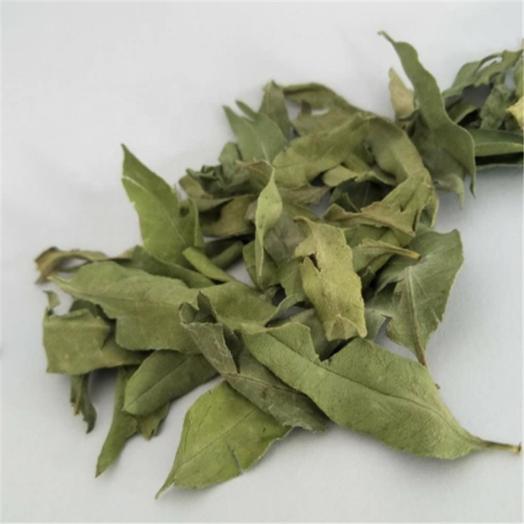 Chinese Natural Apocynum venetum leaf /bluish dogbane leaf /kender leaf tea on sales - 4uTea   4uTea.com