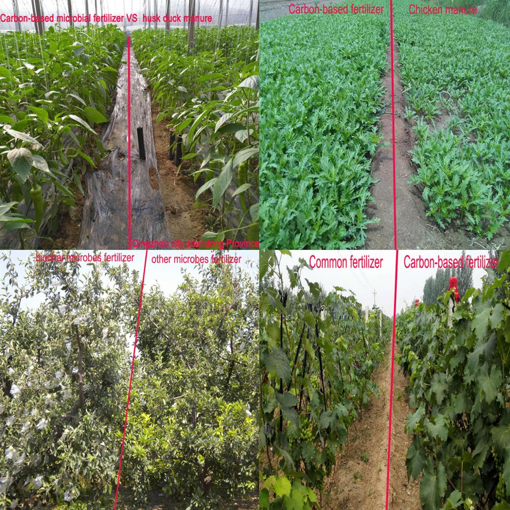 Tangerine Special Fertilizer Citrus Fertilizer Manufacturer from Cirtrus Village