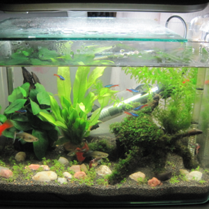 Aquarium China Wholesale, Aquarium Suppliers - Alibaba