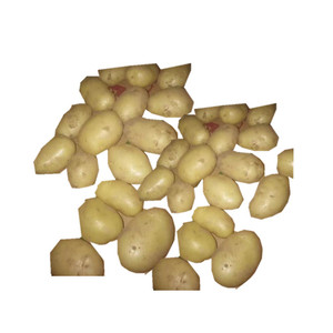factor sale fresh Potato for boiled chilled potato and fried Chips