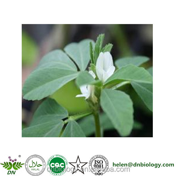 High Quality Certificated Fenugreek extract , Fengreek seed extract 90% Trigonelline, Fengreek straight powder
