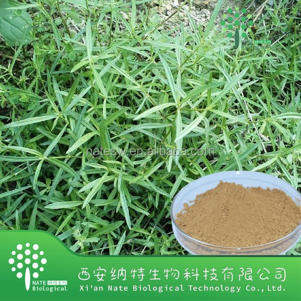 Natural Plant extract Oldenlandia diffusa powder extract