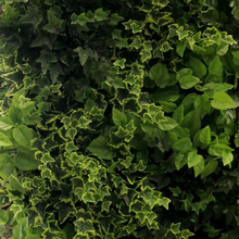 artificial creeper for plant wall, artificial creeper for plant wall