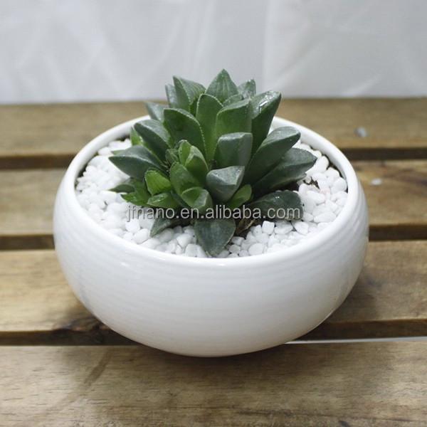 decoracin creativa pequeo blanco forma de tazn macetas de cermica
