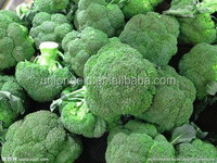 Frozen broccoli florets High quality Green and healthy