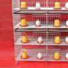 TUV certificated High quality Battery cage A type