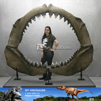 My-dino life size shark jaws fossil for museum