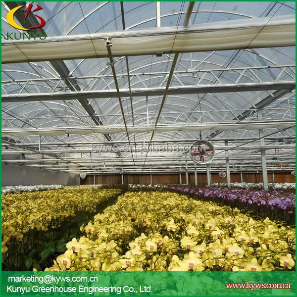 orchidée fleur d'exportation taiwan pépinière d'orchidées orchidée