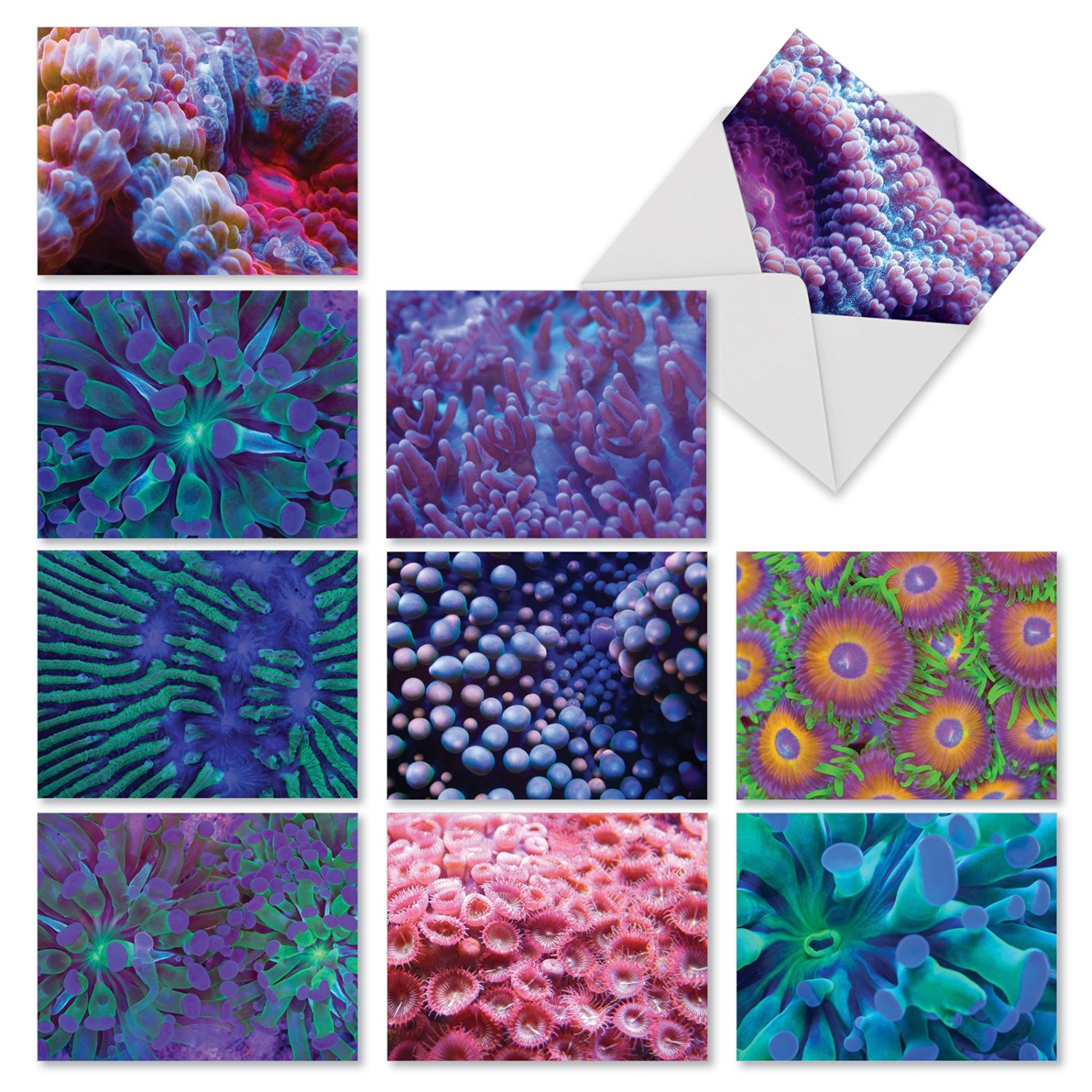 M2103 Under The Sea: 10 Assorted Thank You Note Cards Featuring Colorful Close-Ups of Sea Anemones, w/White Envelopes.