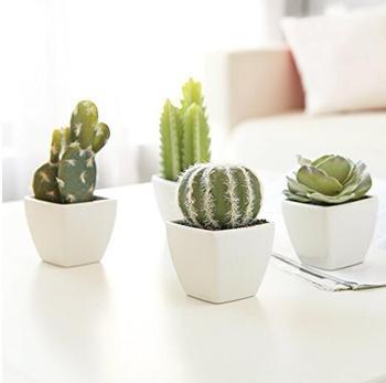 Mini Indoor Cactus Plants In White Cube Shaped Ceramic Flower Pots