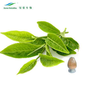 China Manufacturer Plant Herb Green Tea Leaf Extract