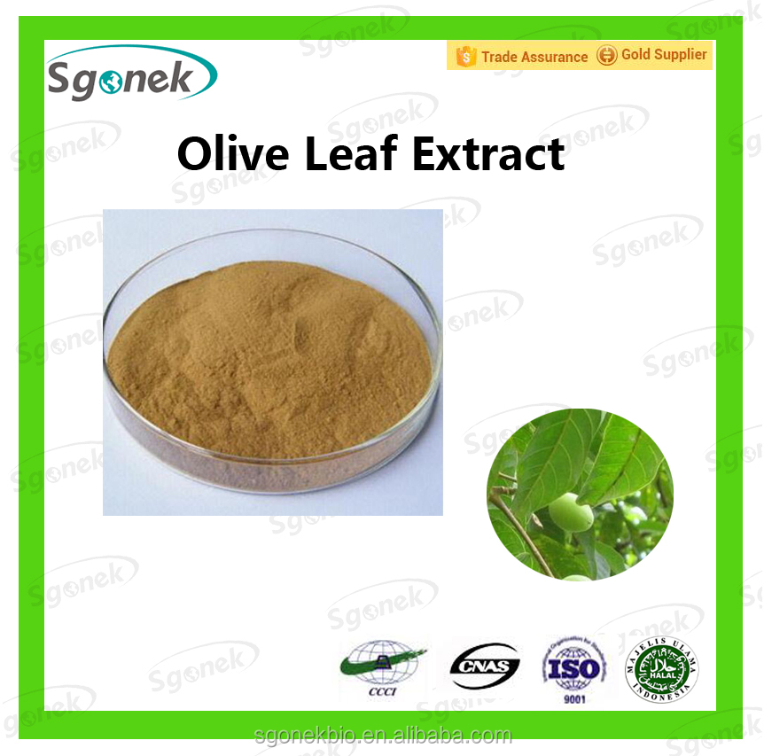 Olive leaf Extract With Oleuropein 10%-98%/Water Soluble