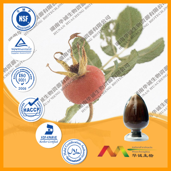 Factory Price 100% Natural Rose Hip Extract