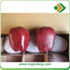wholesale prices apple fruit from tianshui