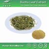 Manufacturer Supply Top Quality Buchu Leaf Extract Powder (4:1 5:1 10:1 20:1) with herbal supplement