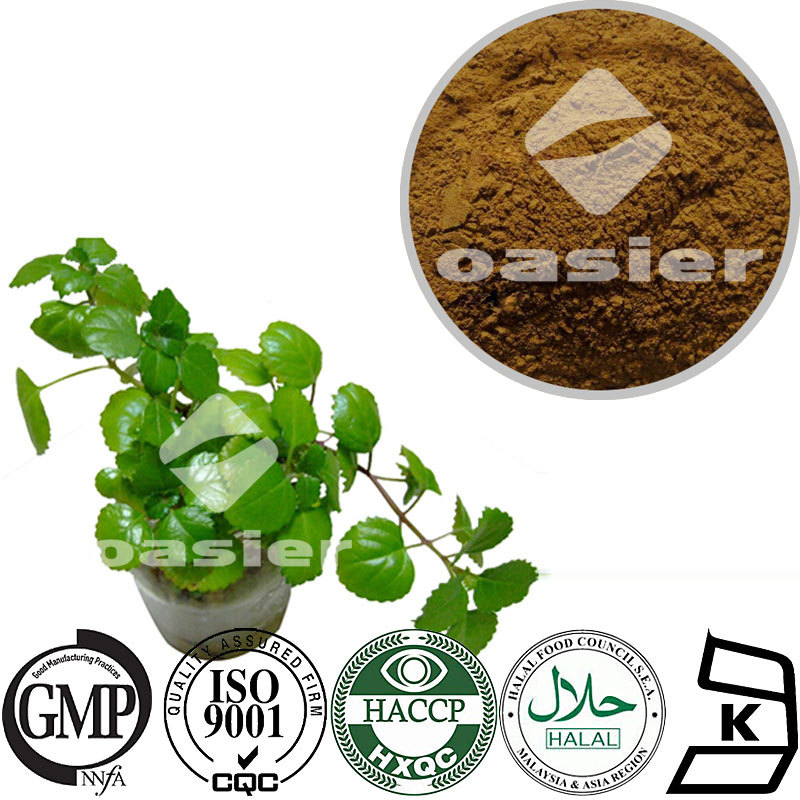 Best Quality 10 Years Gold factory Supplier Climbing Ivy Leaf Extract 10%Hederacoside C