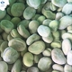 IQF vegetable frozen broad beans fava beans