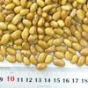 high quality Soymilk raw material New Crop Yellow Kidney Beans
