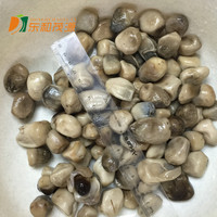 half straw mushroom in brine whole straw mushrooms