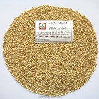Glutinous food grade white broom corn millet/proso millet