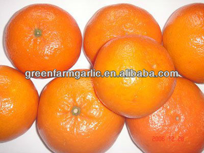 delicious 2013 Mandarin orange for international market