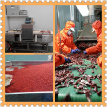 china supplier HOT PEPPERS WHOLESALE smoked paprika chili pepper chilli peppers for liquid sauces