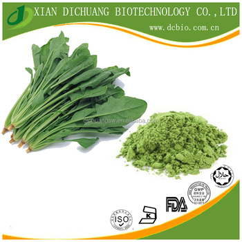 health food supplement Natural dried Spinach powder /spinach leaf extract powder